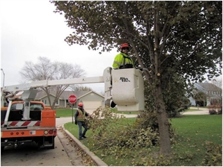 Franklin DPW performing fall pruning operations.