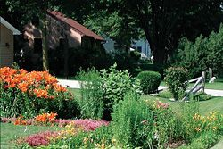 Rain gardens have many benefits!